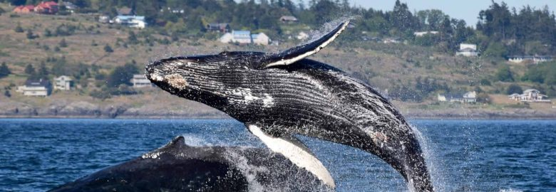 Spring Tide Charters & Whale Watching